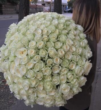 """151 роза """"Аваланч"""""""