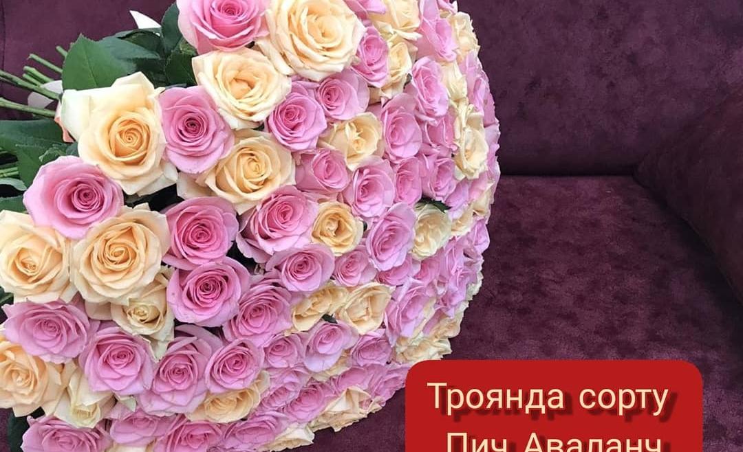 Акційна ціна на троянду сорту «Піч Аваланч та Аква»