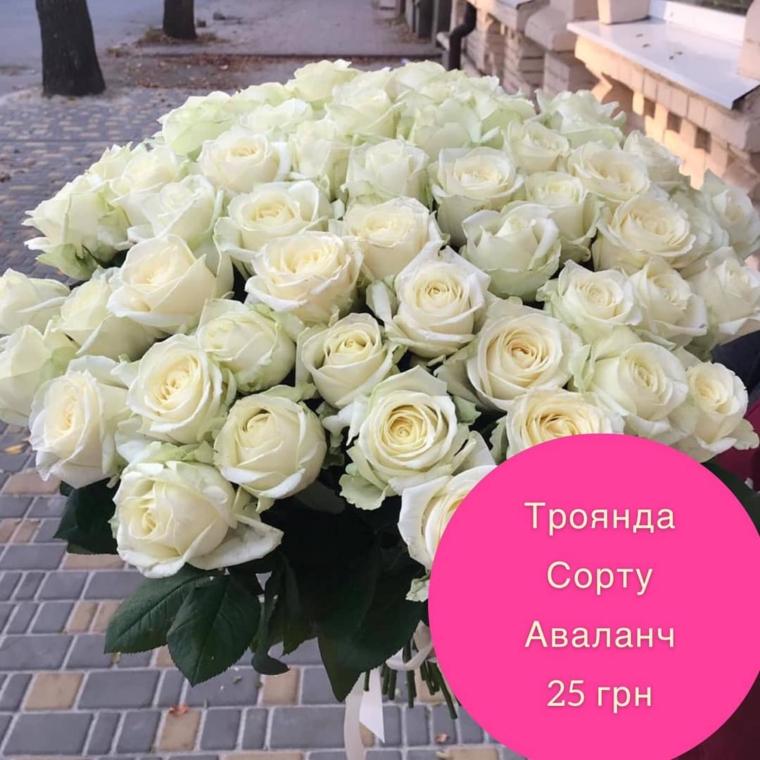Акційна ціна на троянду сорту «Аваланч»