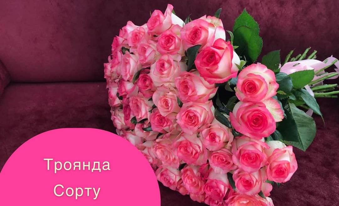 Акційна ціна на троянду сорту «Джумілія»